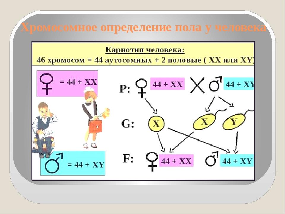 Хромосомное определение пола у человека