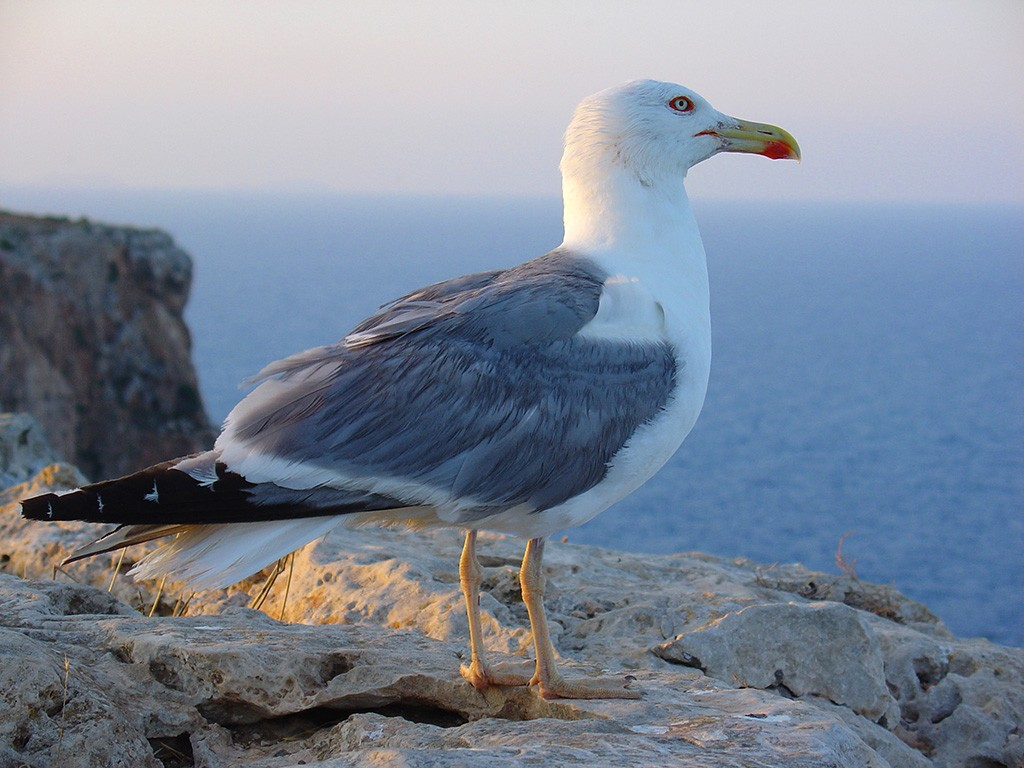 Птицы у моря название