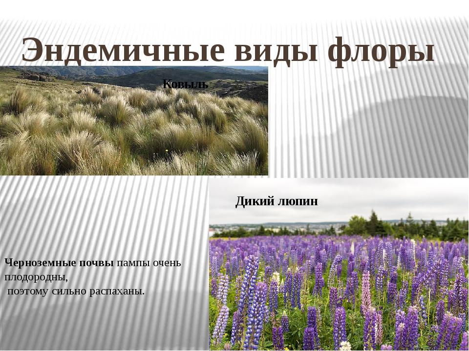 Эндемичные виды флоры Ковыль Дикий люпин Черноземные почвы пампы очень плодор...