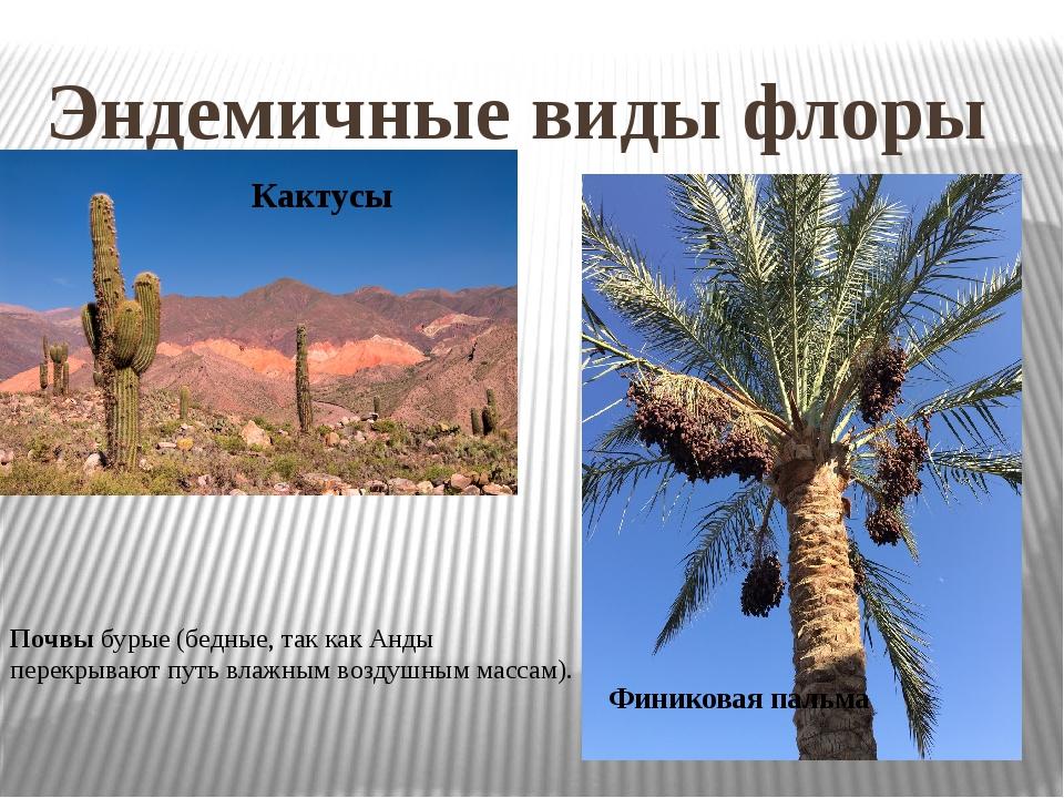 Эндемичные виды флоры Кактусы Финиковая пальма Почвы бурые (бедные, так как А...