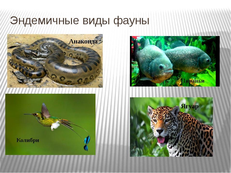 Эндемичные виды фауны Анаконда Пираньи Колибри Ягуар