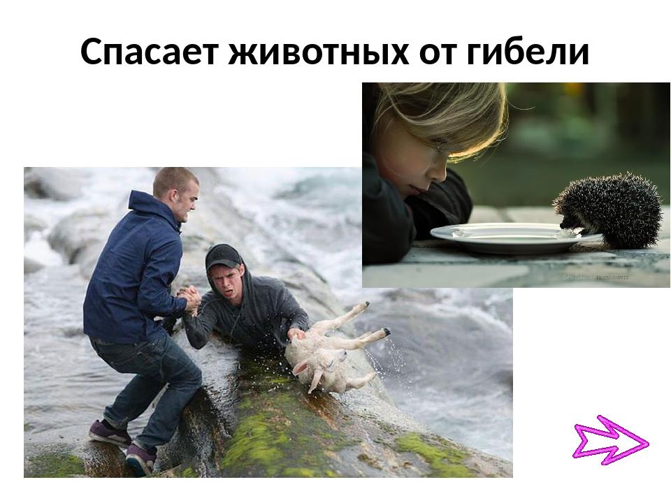 Спасает животных от гибели