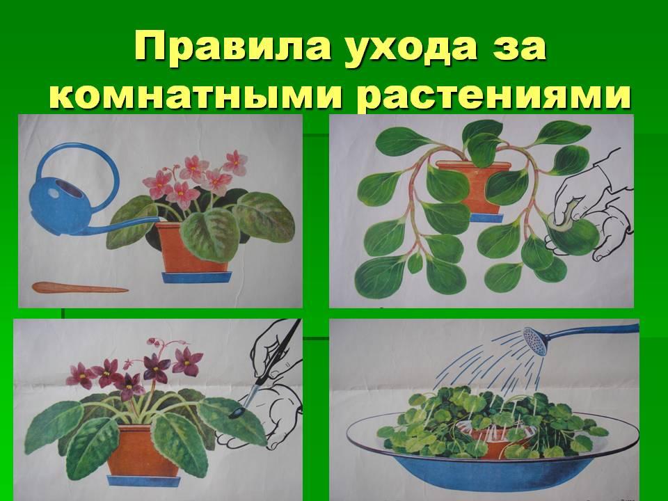 Алгоритм полива цветов в детском саду в картинках, смешные