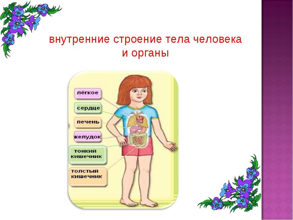 Объемной открытки, строение тела человека картинки с надписями