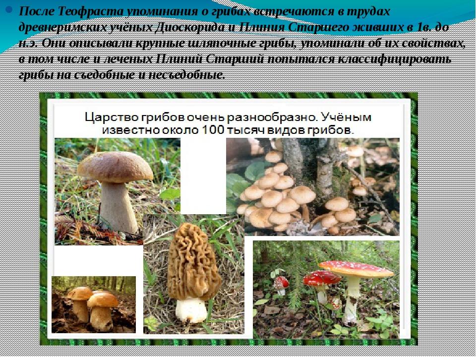 После Теофраста упоминания о грибах встречаются в трудах древнеримских учёных...