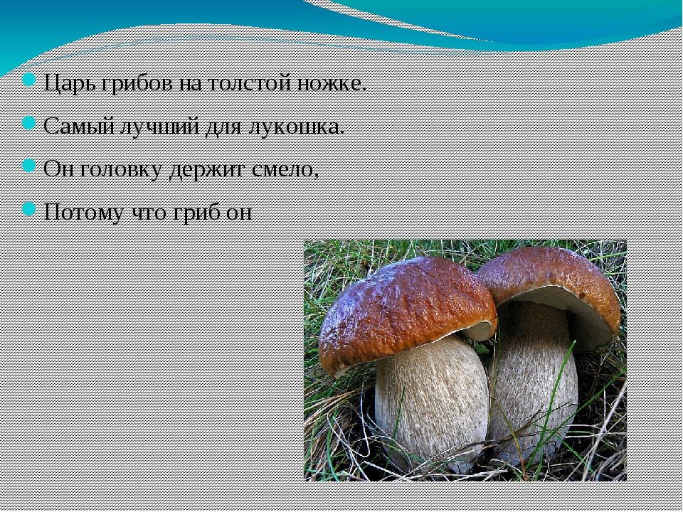 Царь грибов на толстой ножке. Самый лучший для лукошка. Он головку держит сме...