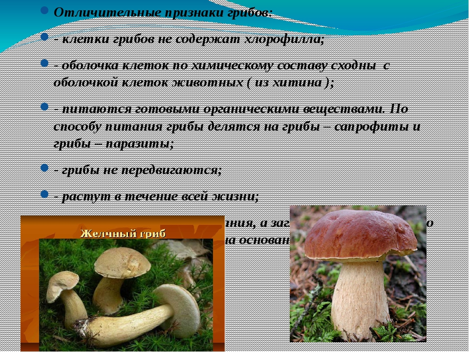 Отличительные признаки грибов: - клетки грибов не содержат хлорофилла; - обол...
