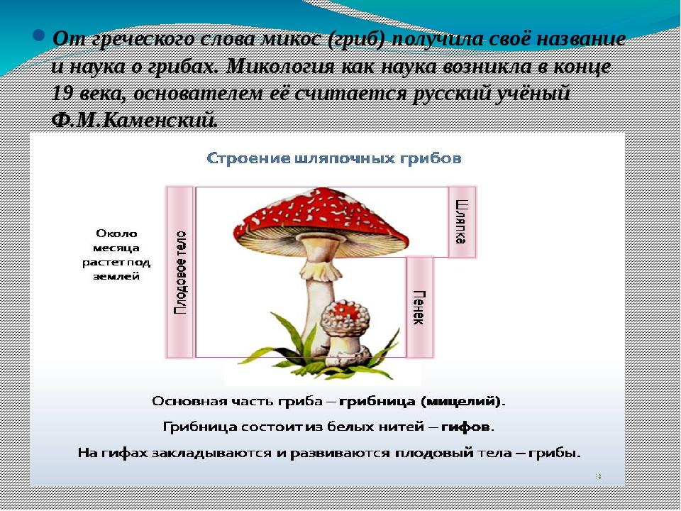От греческого слова микос (гриб) получила своё название и наука о грибах. Ми...