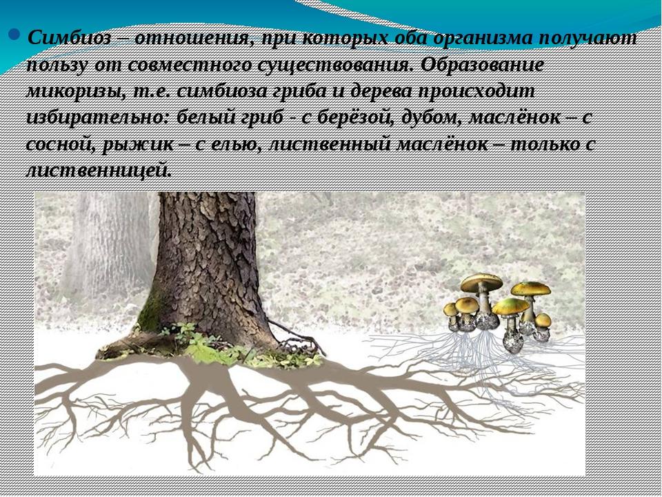 Симбиоз – отношения, при которых оба организма получают пользу от совместного...