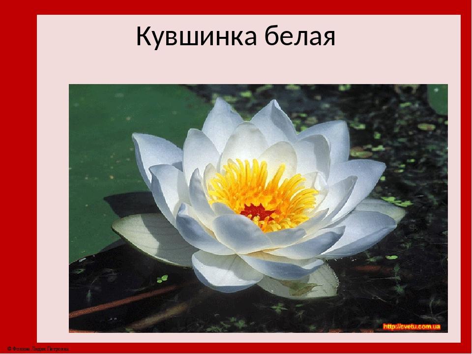 Страница красной книги россии с кувшинкой белой правило