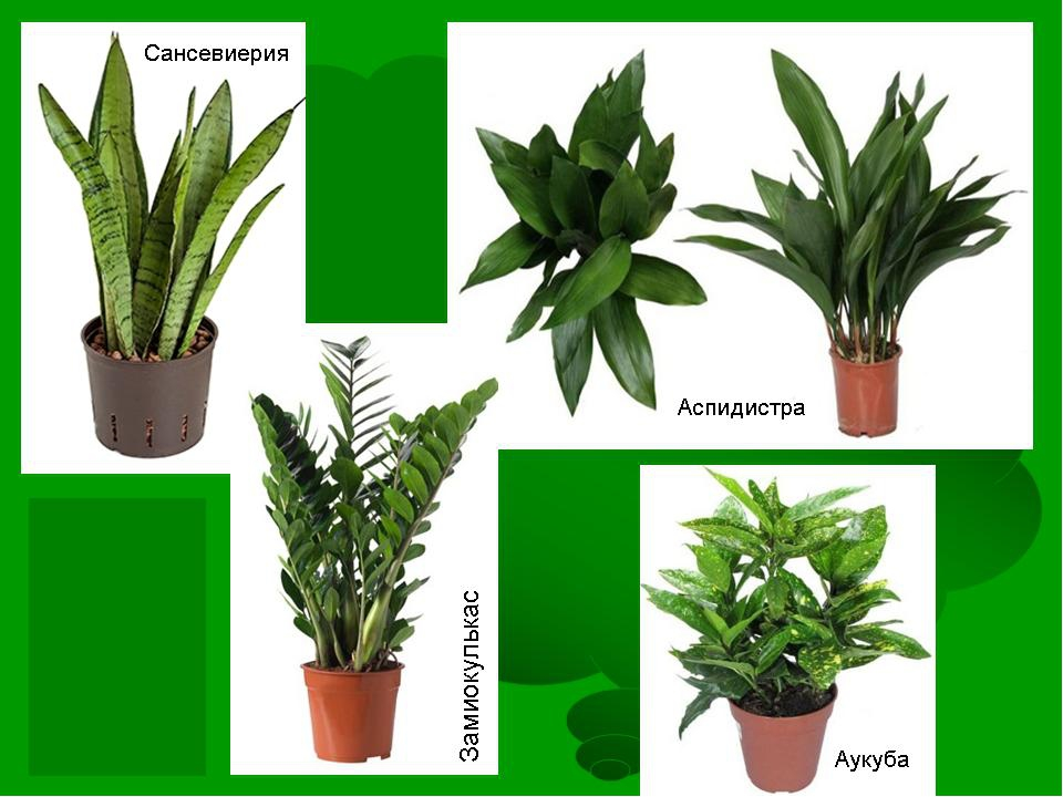 разные годы названия домашних растений с картинками стиля