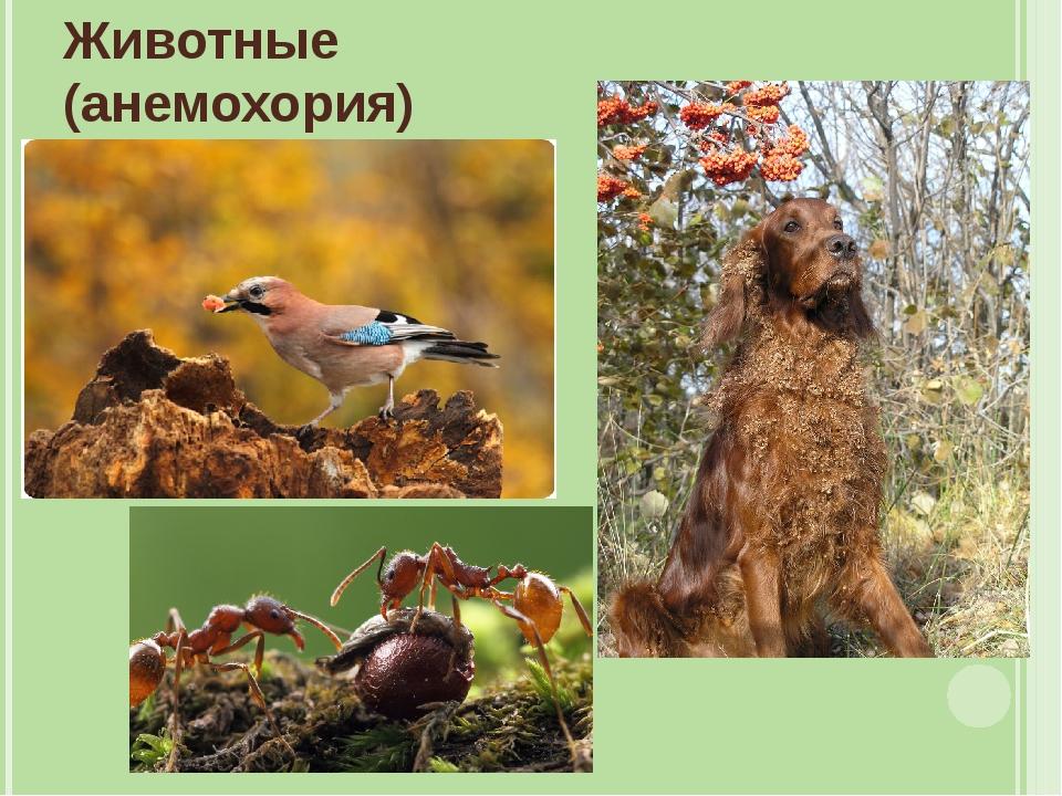 флаг насекомоядные птицы распространяют плоды и семена растений в природе рекомендовали
