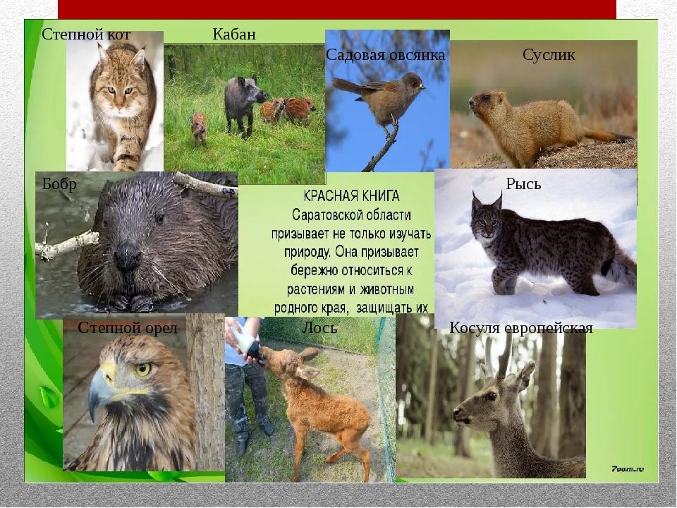 Животные саратовской области картинки