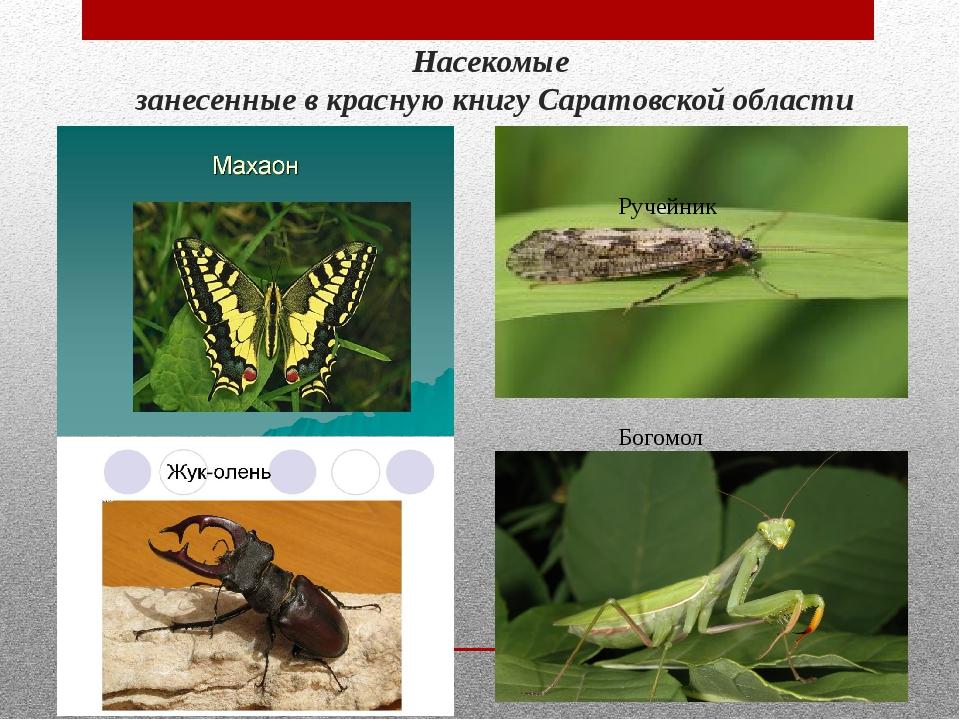 новые животные и насекомые из красной книги россии оцифровывалась