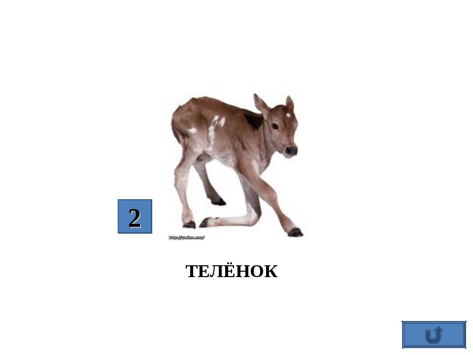 ТЕЛЁНОК 2