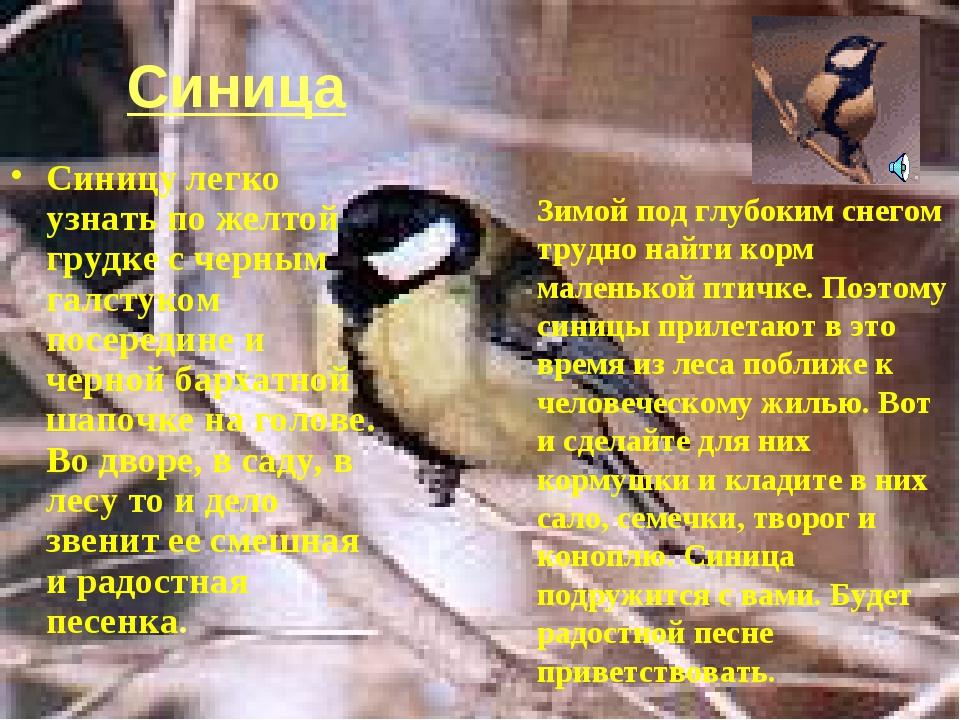 Синица Синицу легко узнать по желтой грудке с черным галстуком посередине и ч...