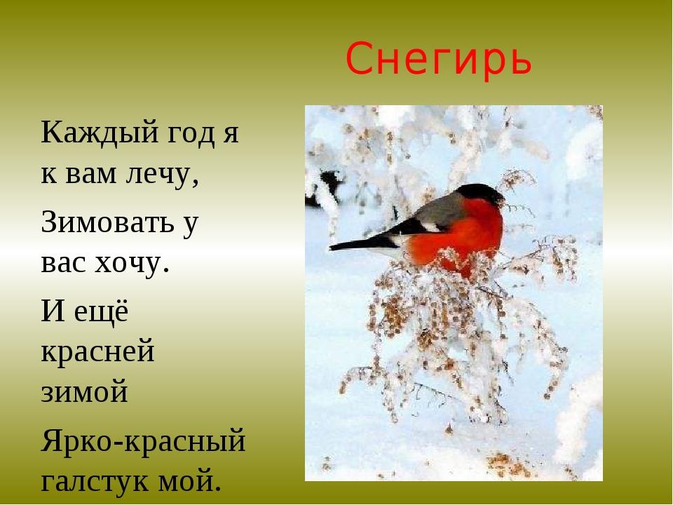 Снегирь Каждый год я к вам лечу, Зимовать у вас хочу. И ещё красней зимой Ярк...