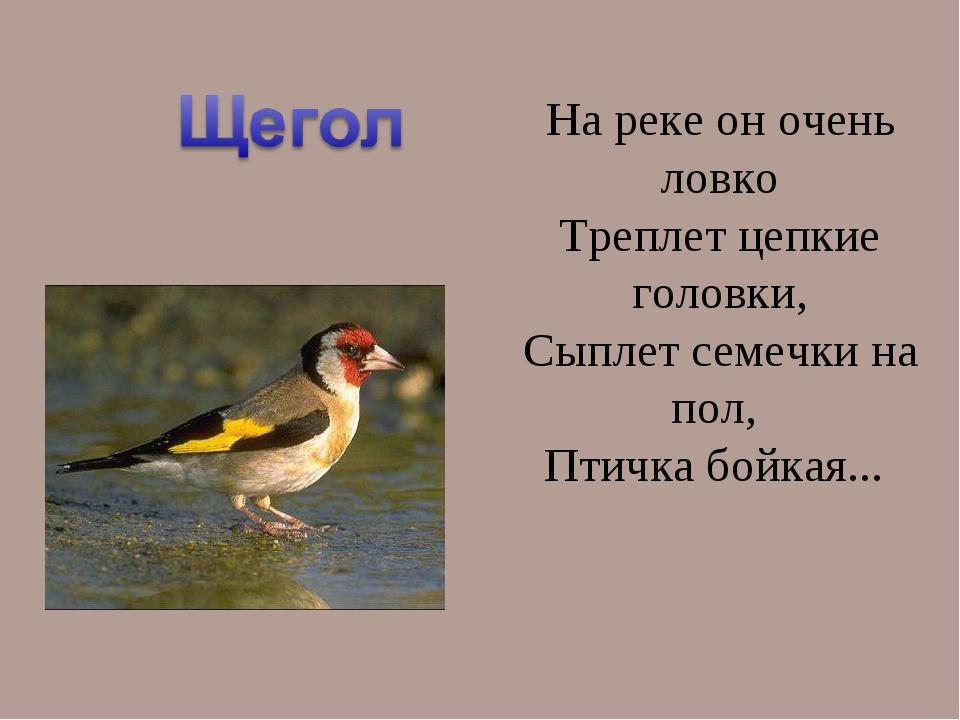 На реке он очень ловко Треплет цепкие головки, Сыплет семечки на пол, Птичка...