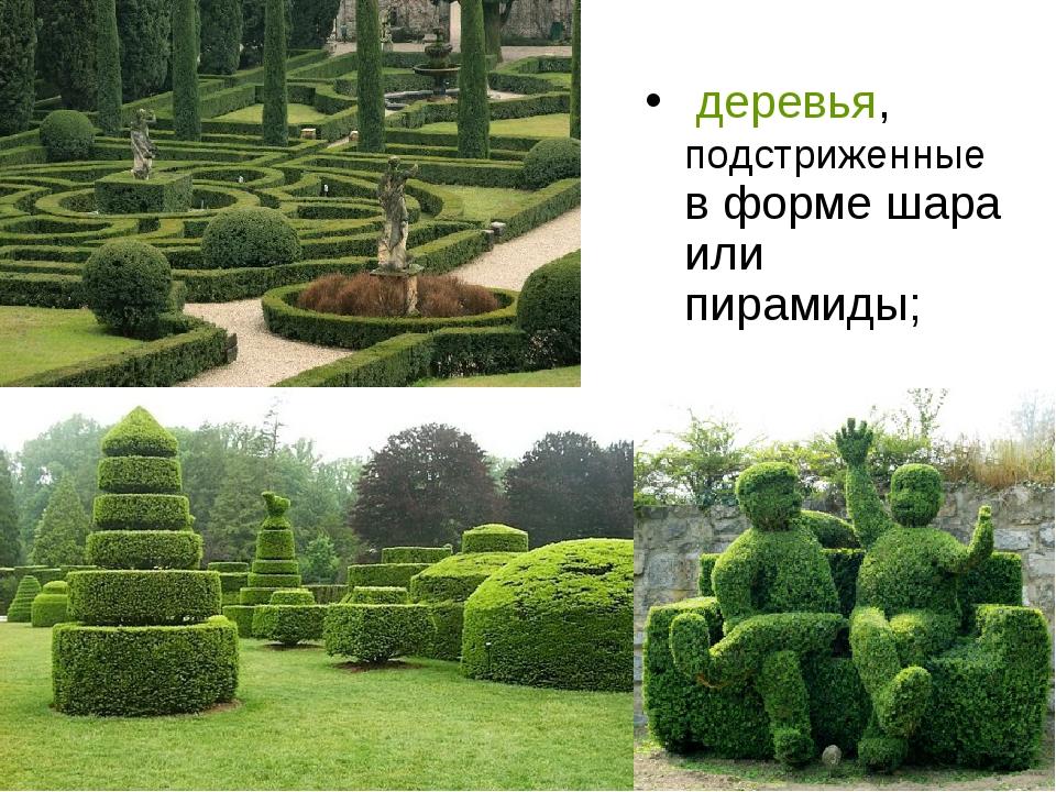 деревья, подстриженные в форме шара или пирамиды;