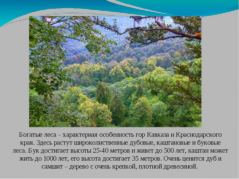 Богатые леса – характерная особенность гор Кавказа и Краснодарского края. Зде...