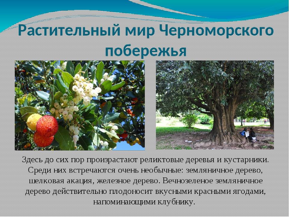 Здесь до сих пор произрастают реликтовые деревья и кустарники. Среди них встр...