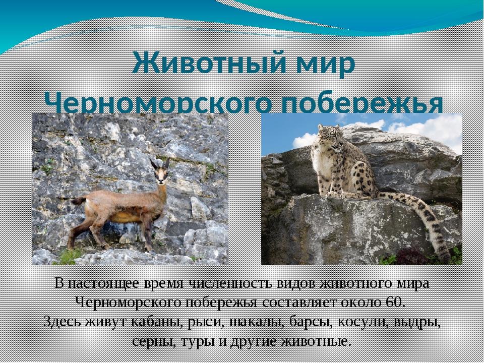 Животный мир Черноморского побережья В настоящее время численность видов живо...