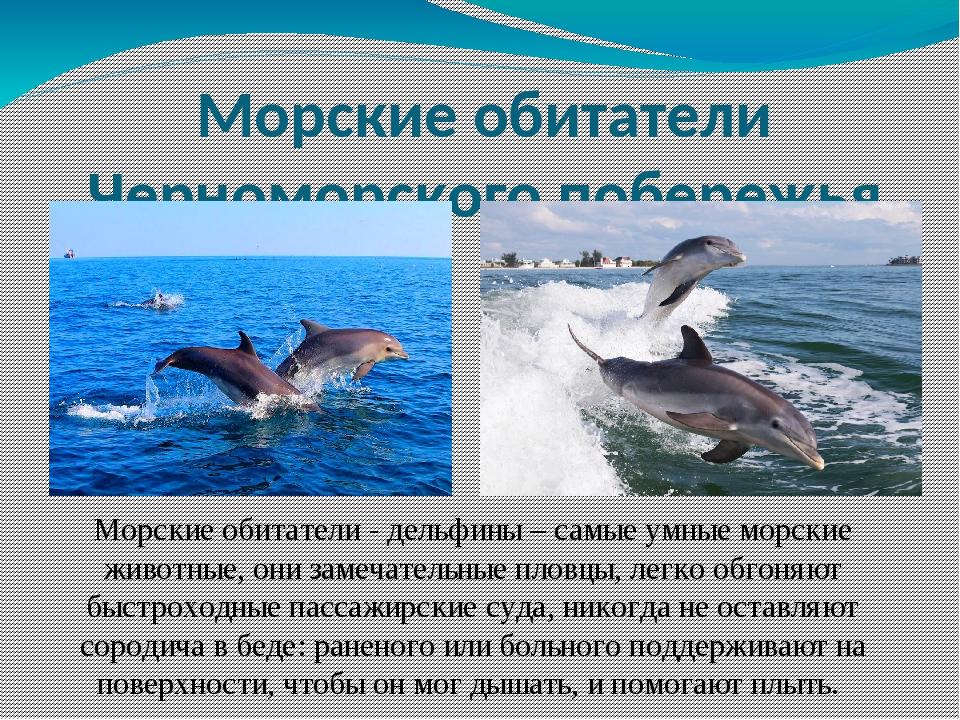 Морские обитатели - дельфины – самые умные морские животные, они замечательны...