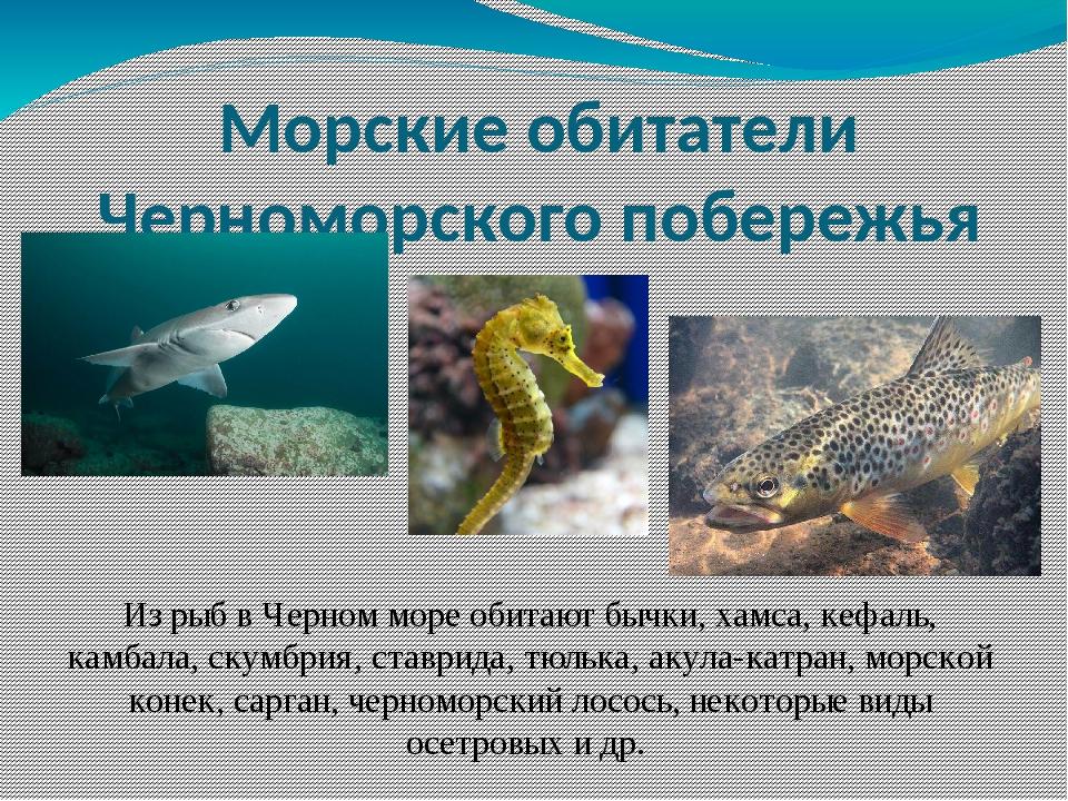Из рыб в Черном море обитают бычки, хамса, кефаль, камбала, скумбрия, ставрид...
