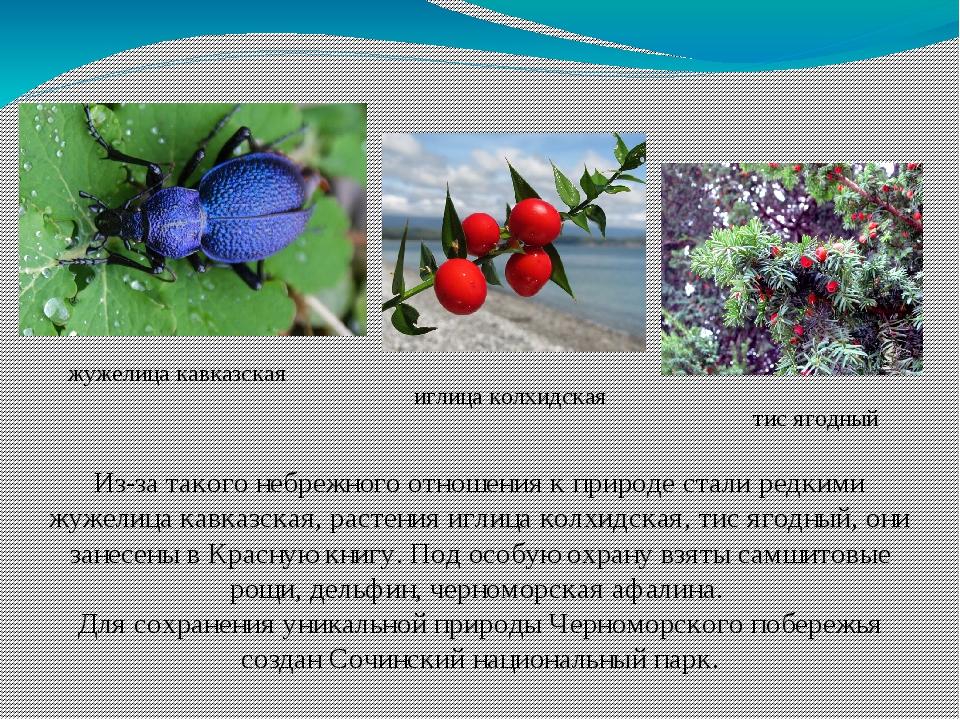 Из-за такого небрежного отношения к природе стали редкими жужелица кавказская...
