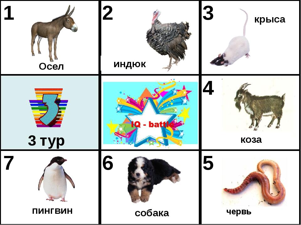 червь Осел индюк крыса пингвин собака коза 3 тур 1 2 3 4 7 6 5