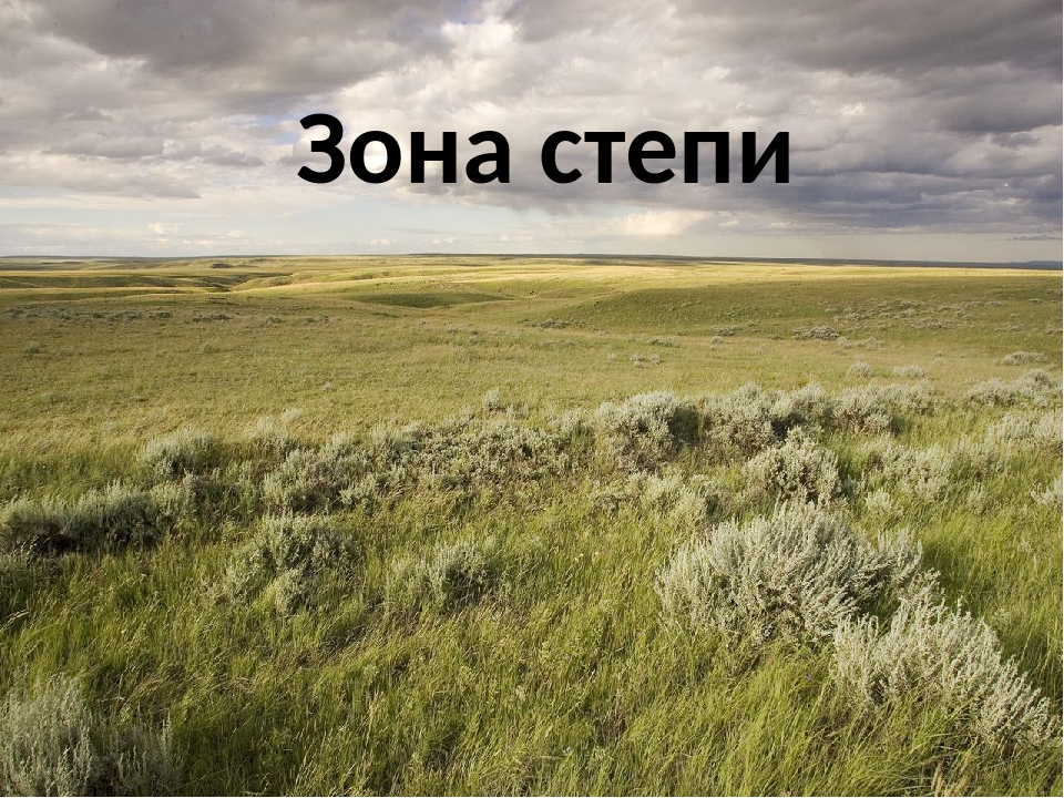 функция природные зоны россии степи этом разделе