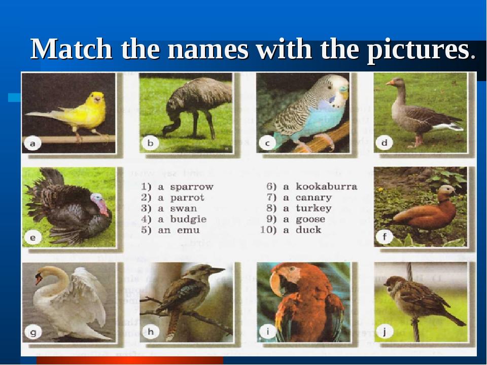 Match the names with the pictures.