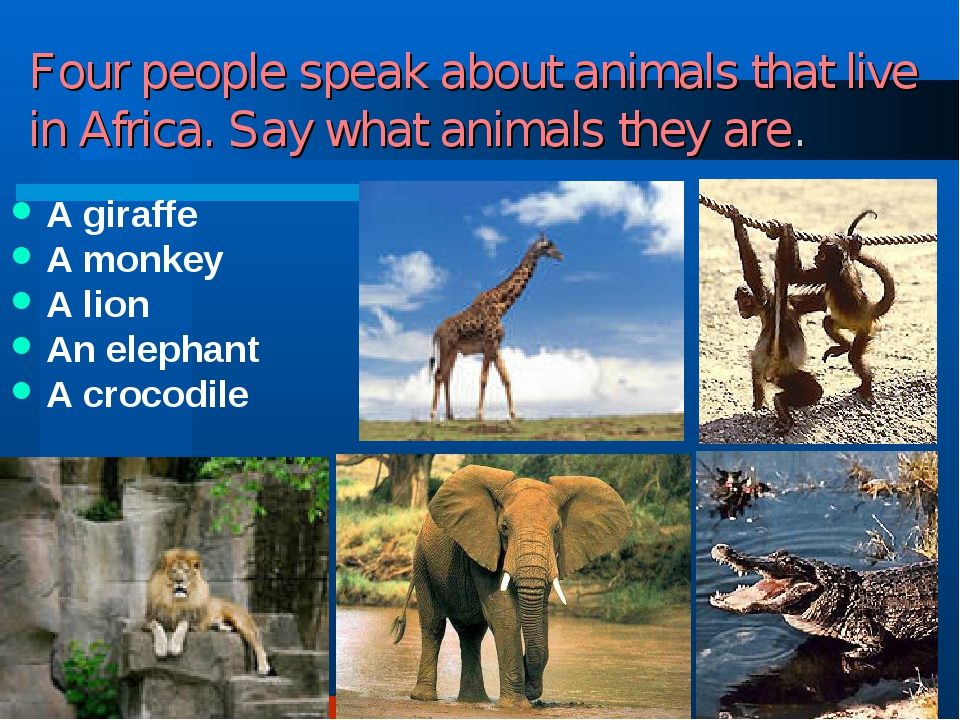 Four people speak about animals that live in Africa. Say what animals they ar...