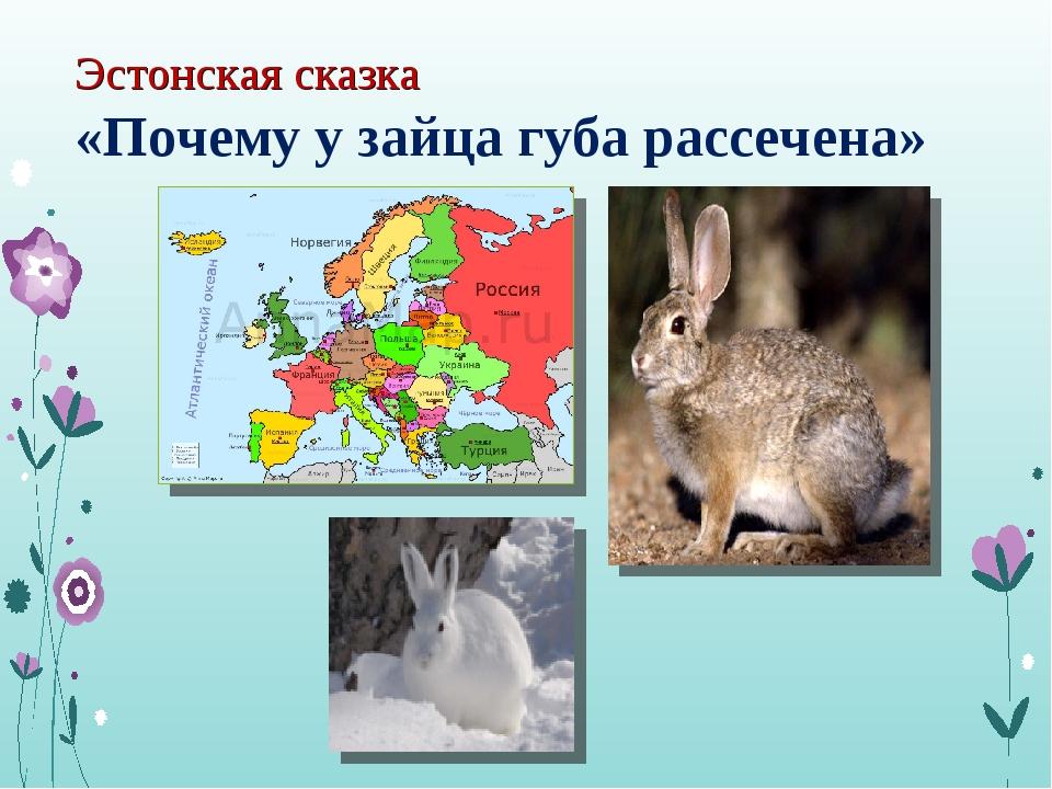 Эстонская сказка «Почему у зайца губа рассечена»