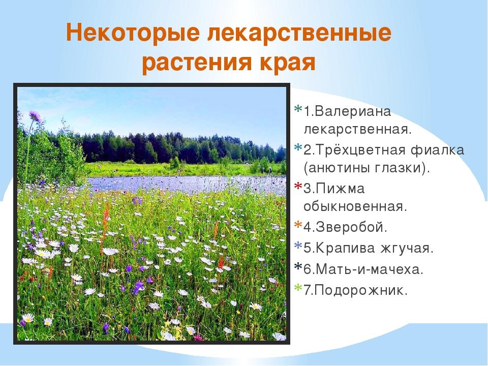 Лекарственные растения ярославской области доклад 6363