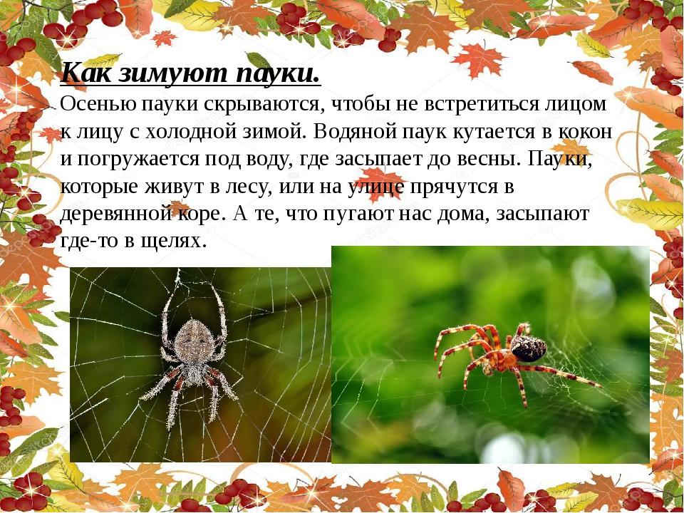 Как зимуют пауки. Осенью пауки скрываются, чтобы не встретиться лицом к лицу...