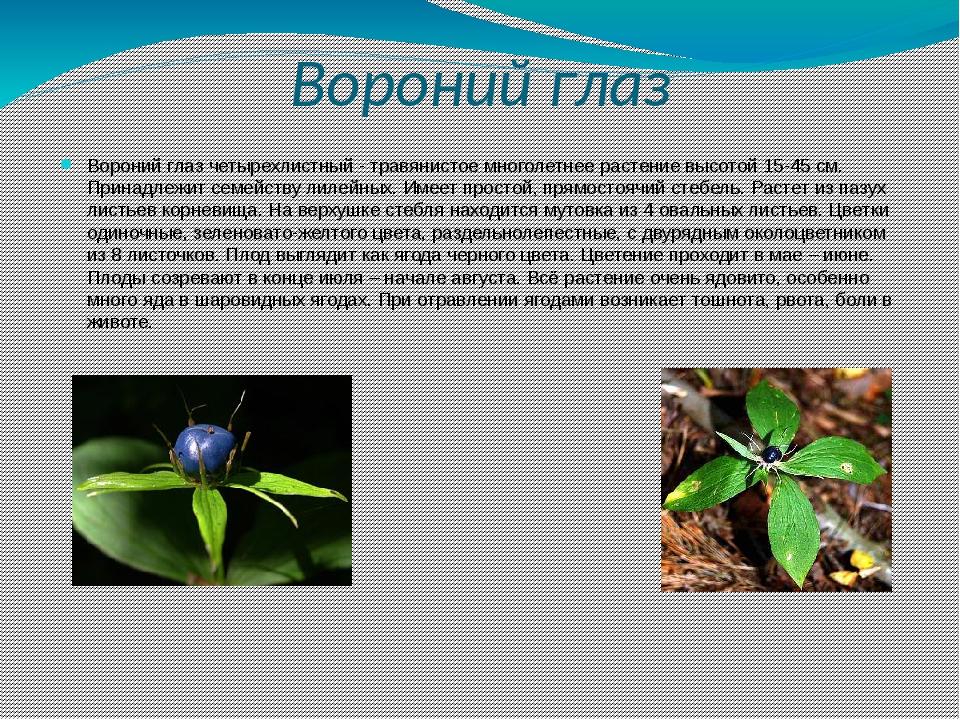 кокто ядовитые растения краснодарского края с картинками возведению забора
