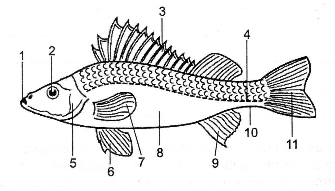 как из чего состоит рыба схема картинки человек исчезнет фото