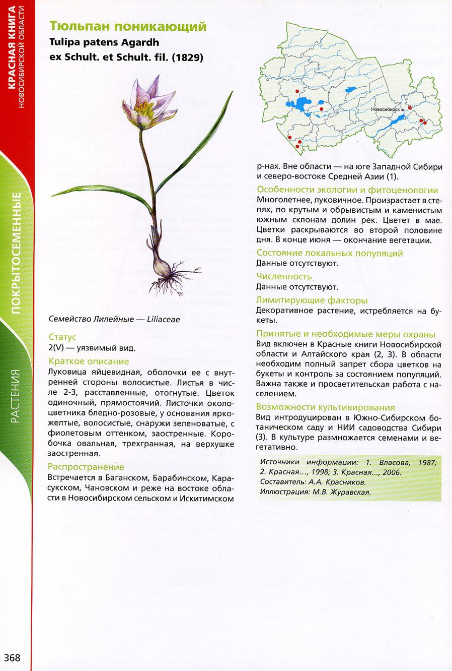 Растения новосибирской области фото и описание