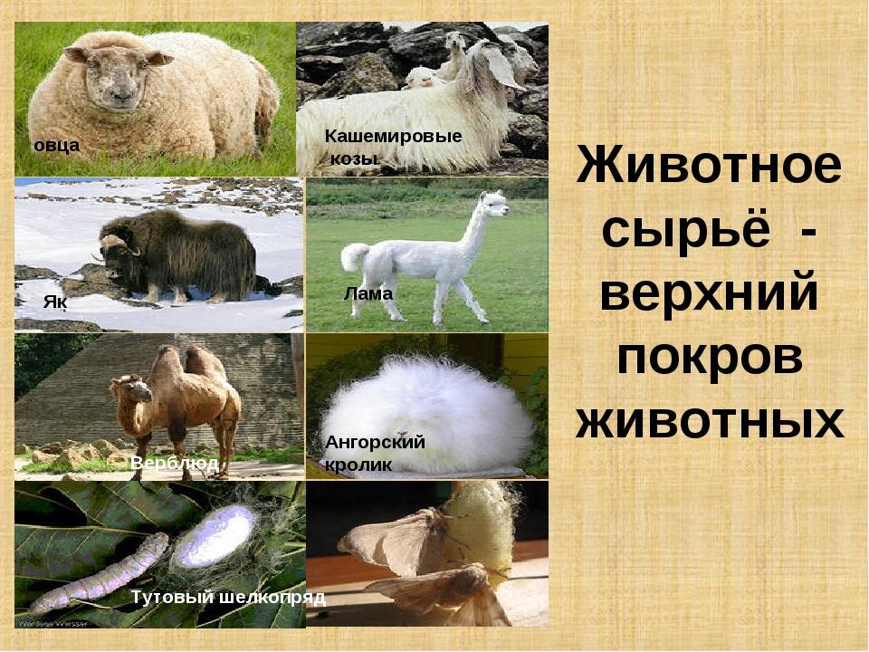 Животноесырьё - верхний покров животных