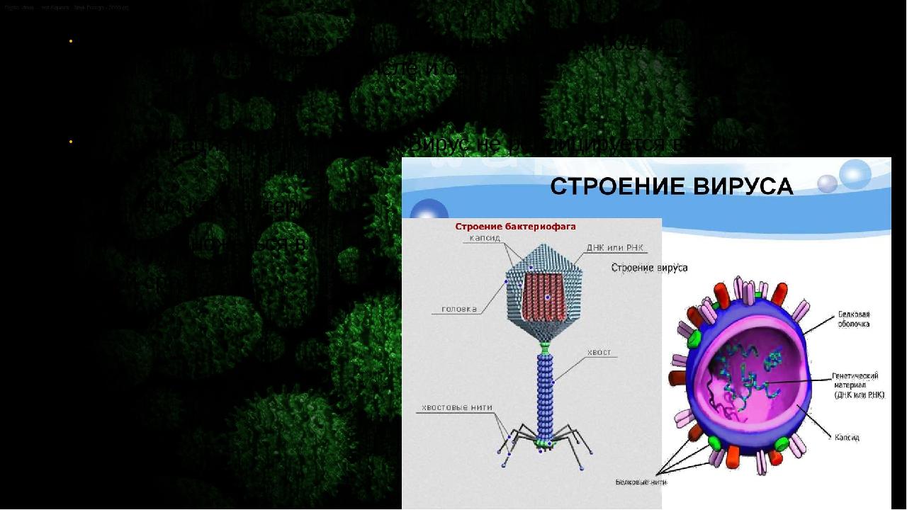 2)Структура. Строение вирусов отличается от строения клеток всех живых орган...