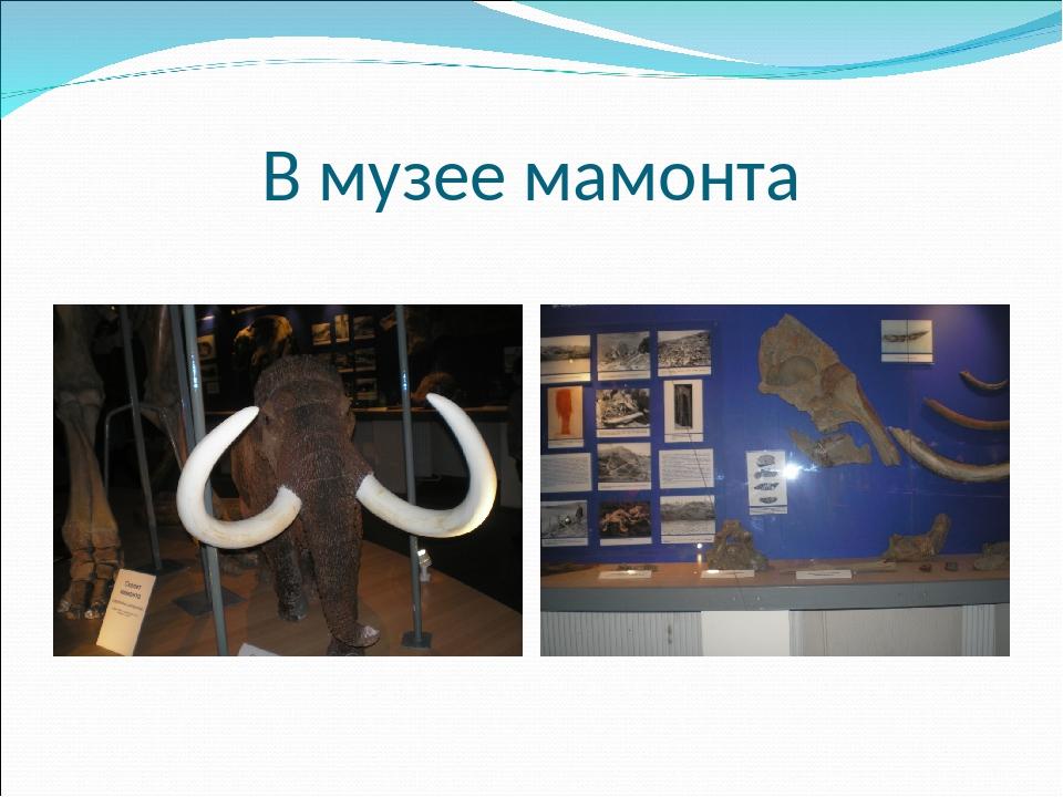 В музее мамонта