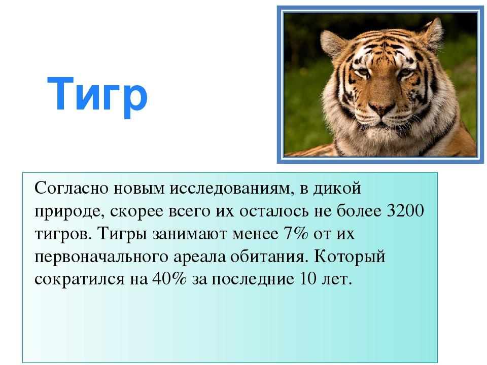 Тигр Согласно новым исследованиям, в дикой природе, скорее всего их осталось...