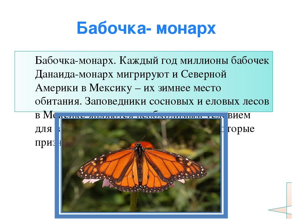Бабочка- монарх Бабочка-монарх. Каждый год миллионы бабочек Данаида-монарх ми...