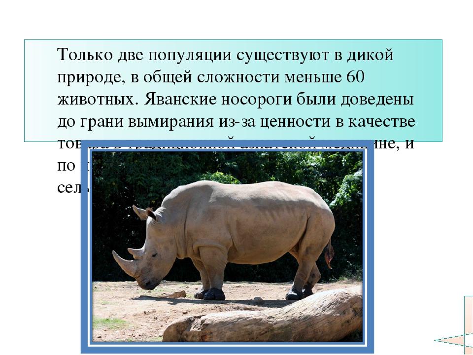 Только две популяции существуют в дикой природе, в общей сложности меньше 60...