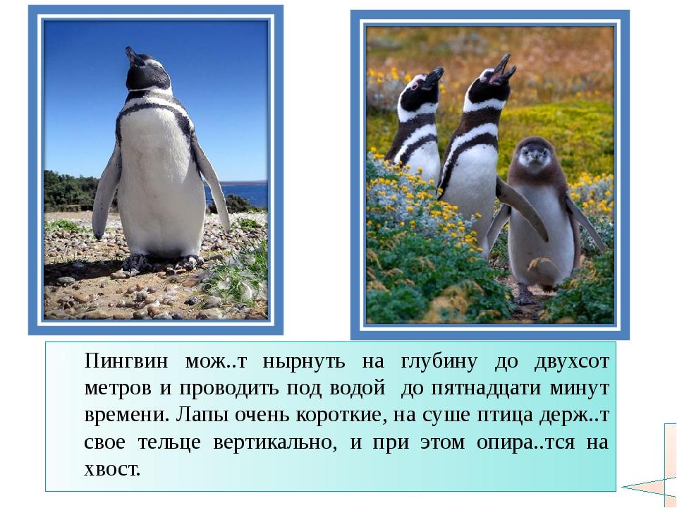 Пингвин мож..т нырнуть на глубину до двухсот метров и проводить под водой до...