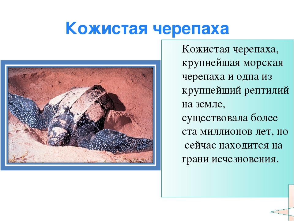 Кожистая черепаха Кожистая черепаха, крупнейшая морская черепаха и одна из кр...