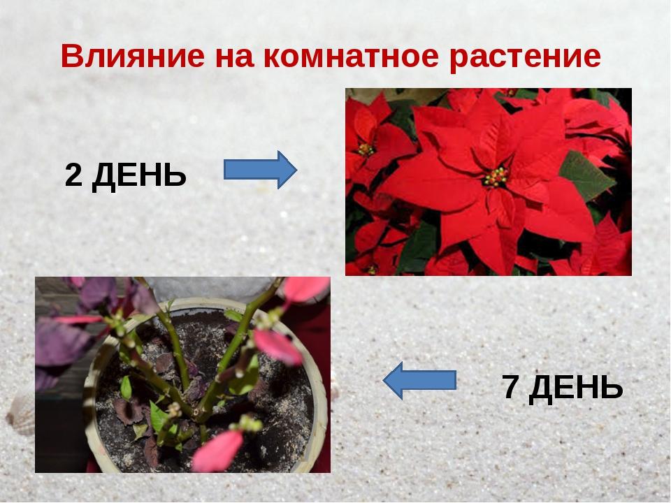 Влияние на комнатное растение 2 ДЕНЬ 7 ДЕНЬ