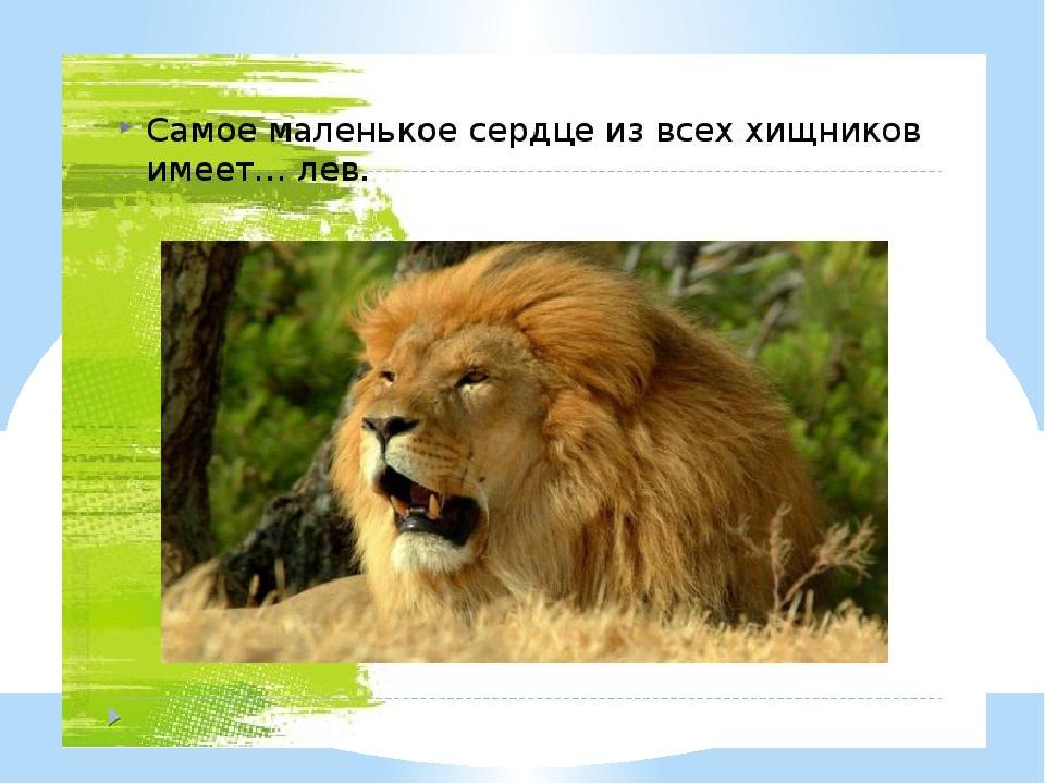 все самое интересное о животных с картинками том