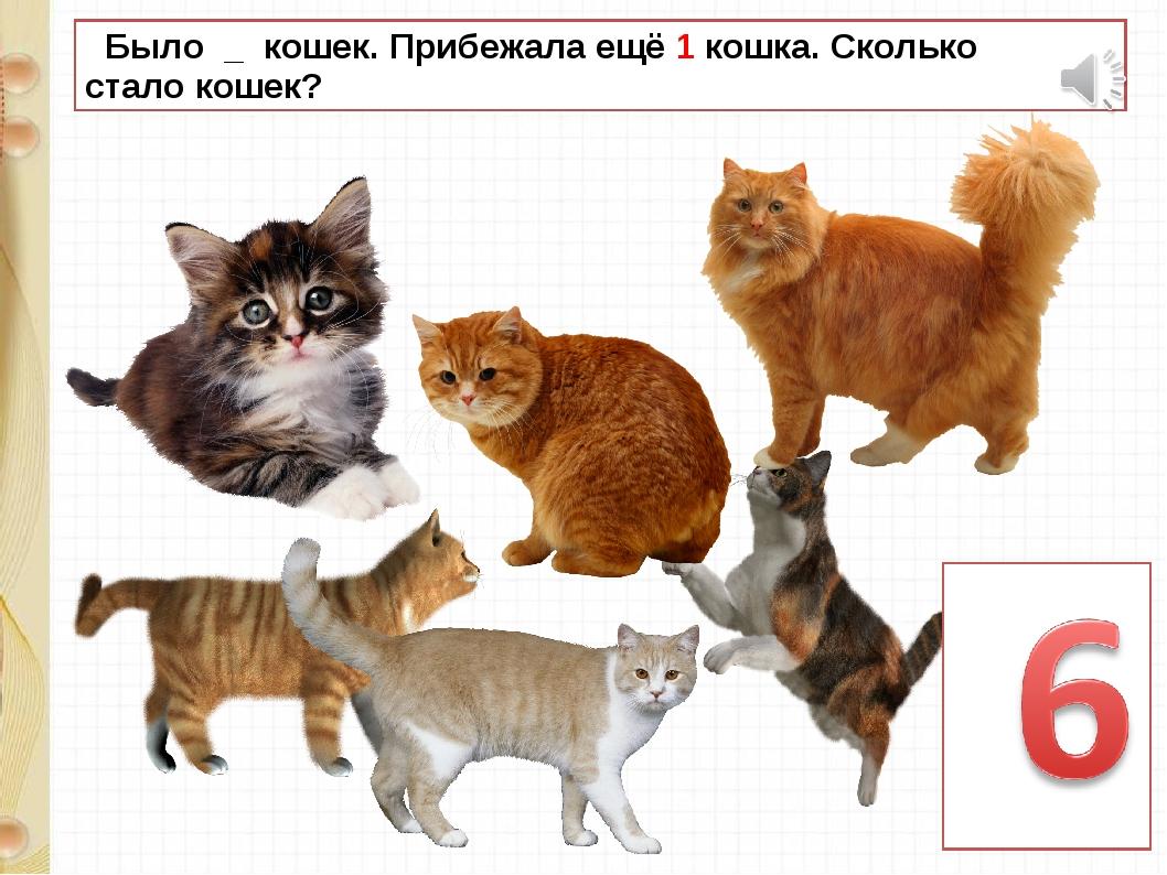 Было _ кошек. Прибежала ещё 1 кошка. Сколько стало кошек?